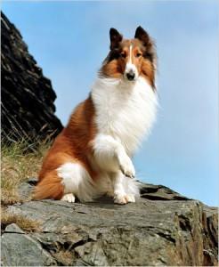 Câini renumiţi şi staruri în filme