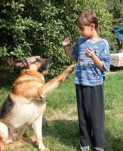 Înţelege-ţi câinele !?