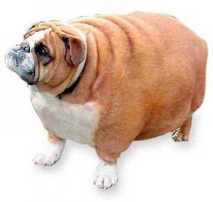 Prevenirea obezităţii