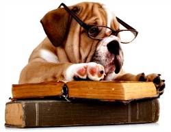 Dictionar canin - C