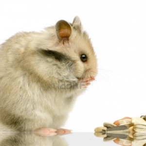 661940-profile-of-a-hamster-standing-up-and-looking-the-food-in-front-of-a-white-background