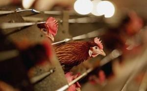 73199851AJ003_Poultry_Farme