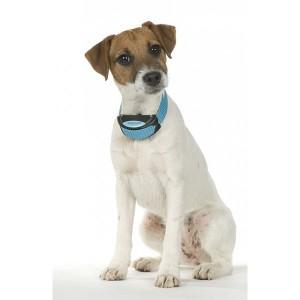 Dresajul canin folosind o zgarda electronica