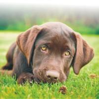 Importanta probioticelor pentru sanatatea animalelor de companie