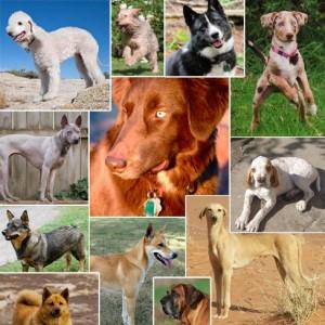 Câini însoţitori, de agrement