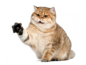 Boala zgârieturii de pisică