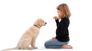 Dresajul unui câine de familie
