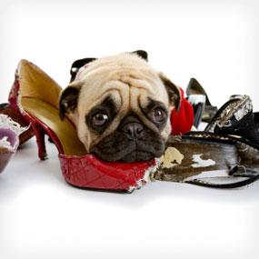 """Trei """"secrete"""" pentru a dezvăţa câinele de proastele obiceiuri"""