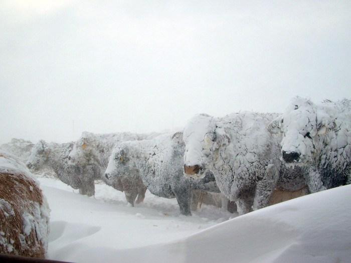 Protejarea animalelor pe timp geros